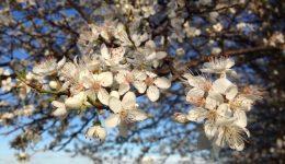 Blossom Fordham (1)