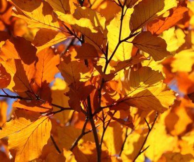 leaf-2012_1920 (1)