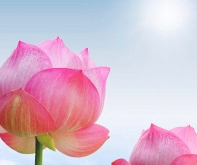 Lotus Buds Sun Square (2)