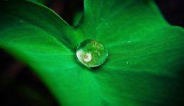 leaf-642115_1920 (1)