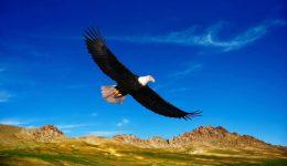prairie-1025229_1280 (1)