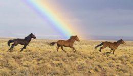 wild-horses-2239420_1920 (1)