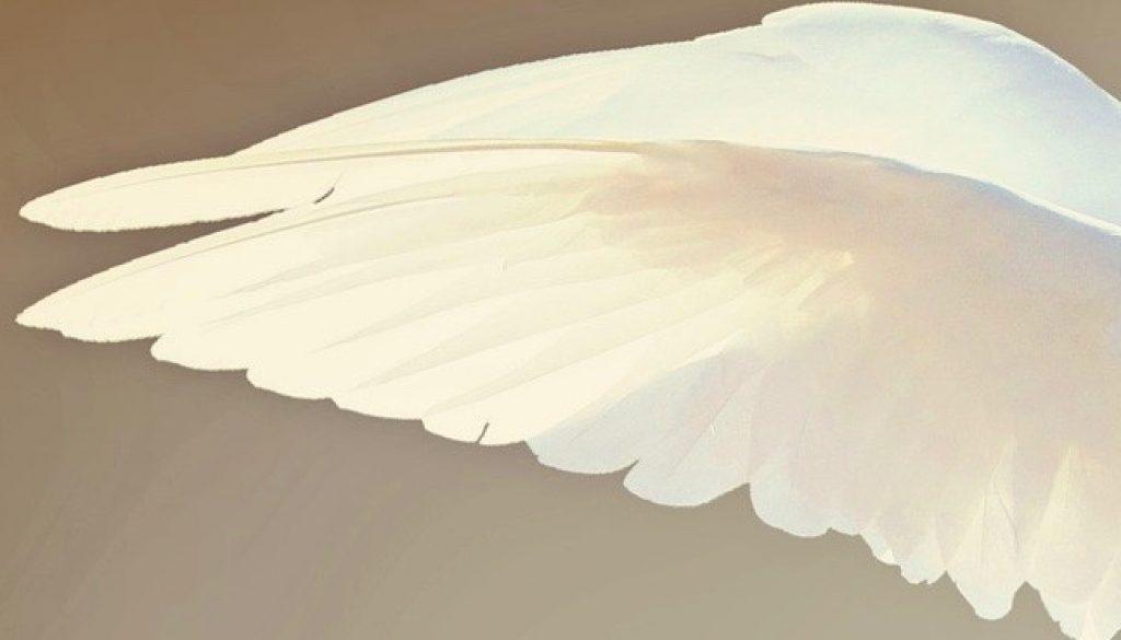 dove-2516641_1920 (3)
