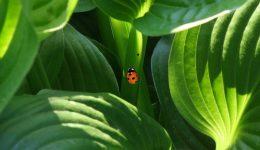 ladybug-179493_1920 (1)