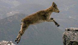 mountain-goats-1156056_1920 (2)