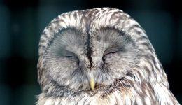 owl-2145698_1920 (2)