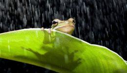 Frog in the rain