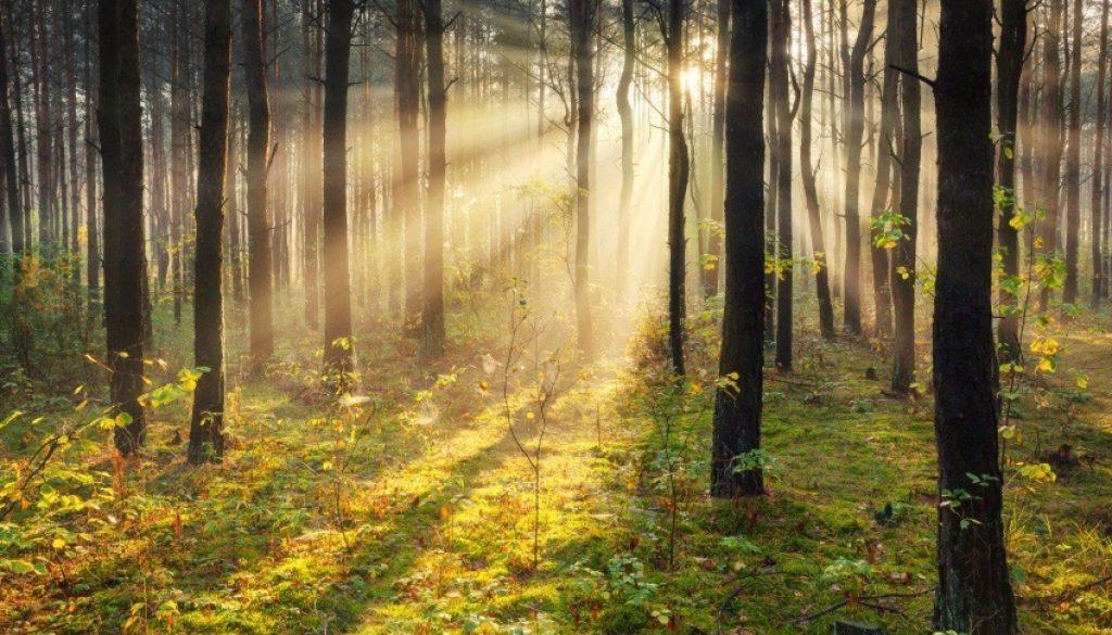Sun Through Trees (1)