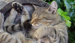 cat-2395102_1920 (2)