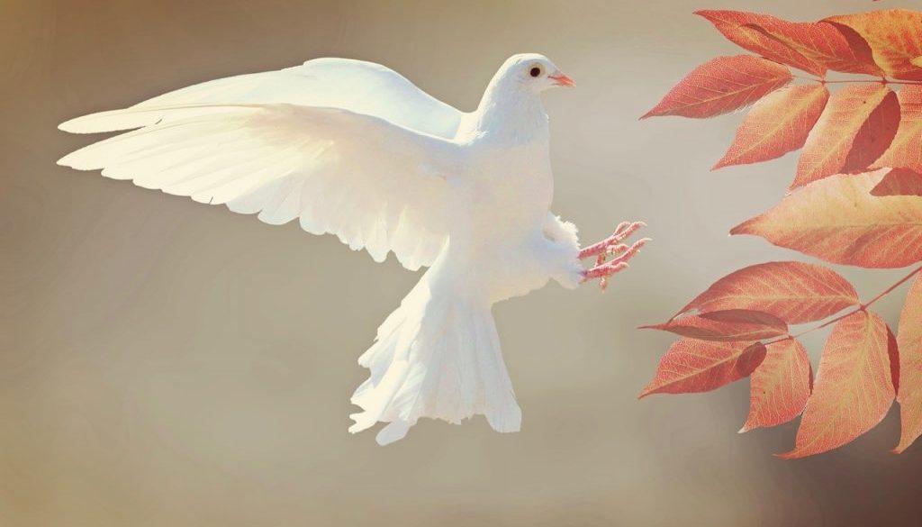 dove-2516641_1920 (2)