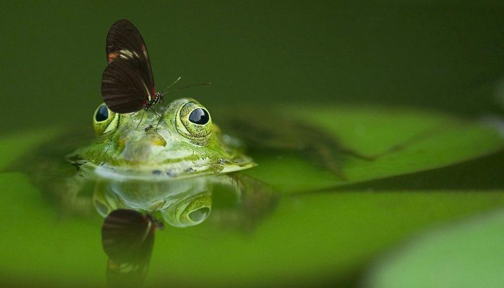 frog-540812_1920 (1)