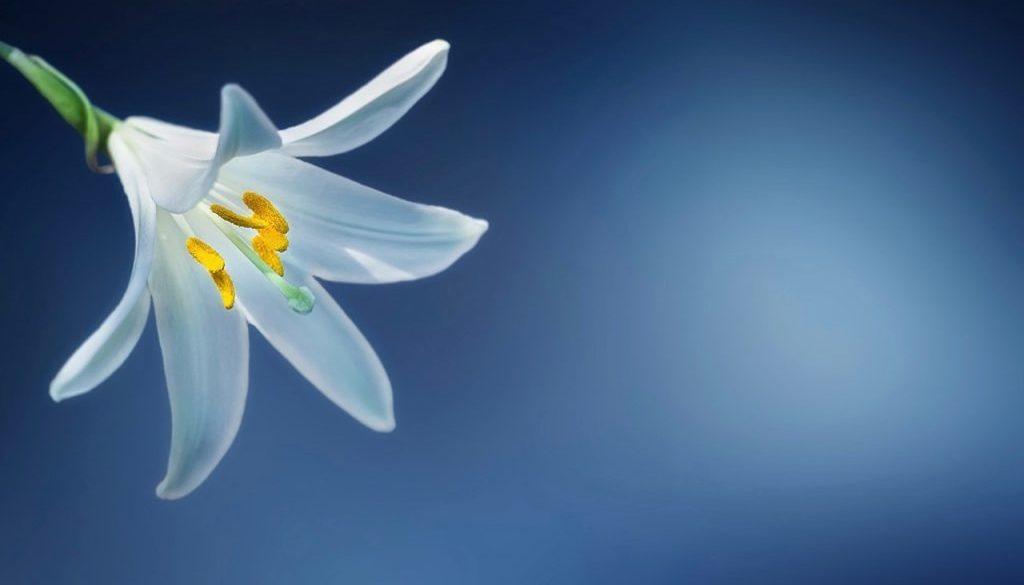 flower-729514 (1)