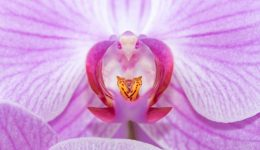 orchid-804140_1920 (1)
