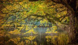 autumn-2722844_1920 (1)
