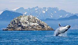 humpback-whale-1744267_1280 (1)