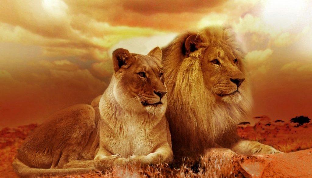 lion-577104_1920 (1)