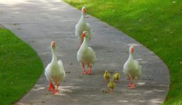 birds-1493789_1920 (1)