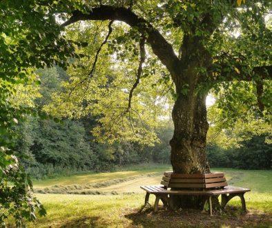 tree-2923837_1920 (1)